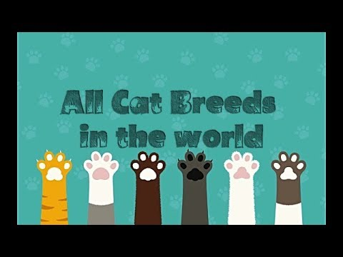All Cat Breeds in the World