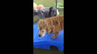 Playtime at Dogs On The Farm & Cats Too!
