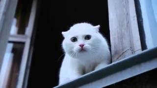 Белый кот защищает квартиру!