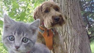 うちのワンコが保護ネコちゃんを大歓迎ラブラブの関係に! https://www....