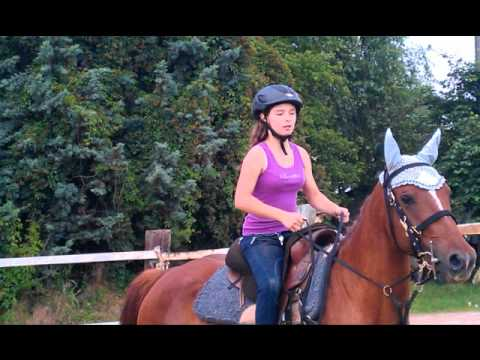 cavallo che scopa una ragazza
