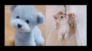 😍Cute dogs and Cats🐶 Funny Animal Videos😁 Adorable Baby Animals🐣Pomeranian puppy