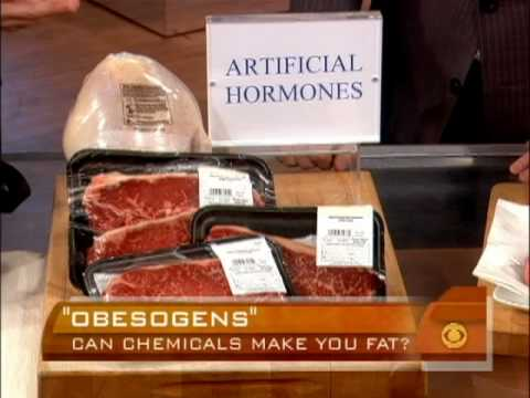 Chemicals That Make You Fat