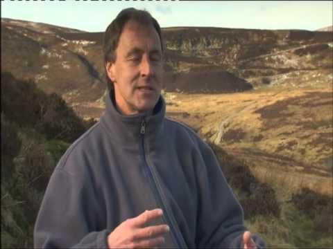 Hen Harrier Facing Extinction BBC Inside Out
