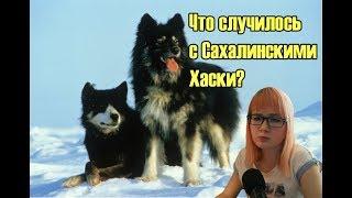 Грустная историях о Карафуто-кен // Что случилось с Сахалинскими хаски?