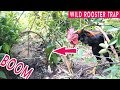 Amazing Quick Wild Rooster Trap Using Wild Wire and Tree, Best Trap Ever, Easy Trap How To Make It