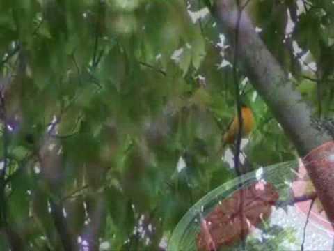 Hamilton Birds 1 0001