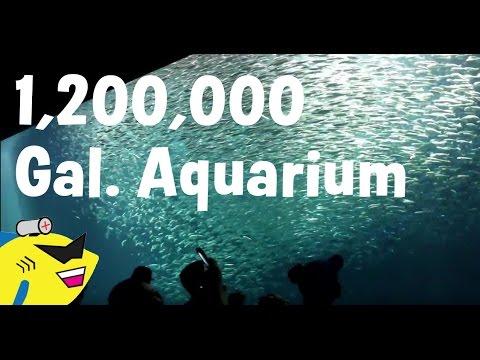 1,200,000 GALLON AQUARIUM TOUR! - The Monterey Bay Aquarium