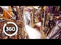 Cathedral of Junk (360 Video)