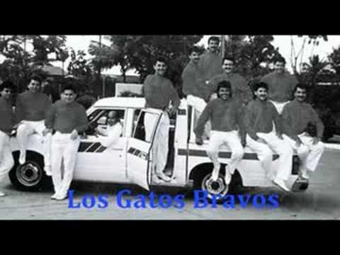 Los Gatos Bravos - El Sambunango ( Version Original )