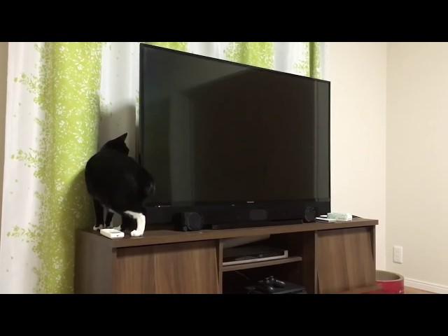 胴体がめっちゃ伸びる猫