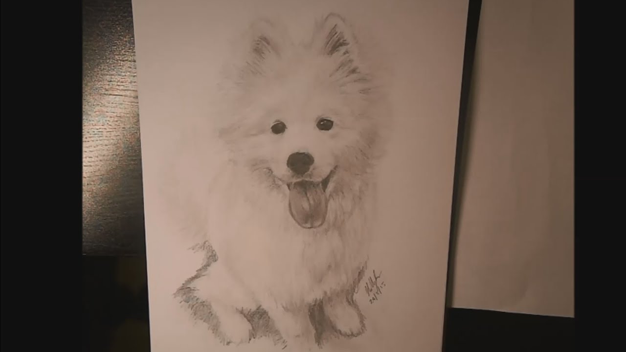 Samoyed Puppy Speed Drawing Mallow Youtube