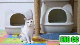 先日購入したiCatオリジナルのかわいい猫型トイレですが、思いの外サイ...