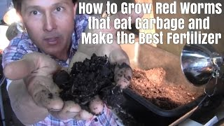 How to Grow Red Worms that Eat Garbage and Make the Best Fertilizer