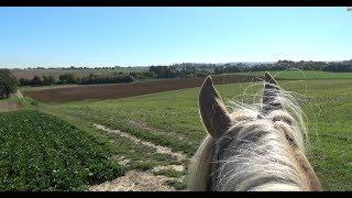 Warum stehen meine Pferde in unterschiedlichen Ställen? Ausritt mit Brego