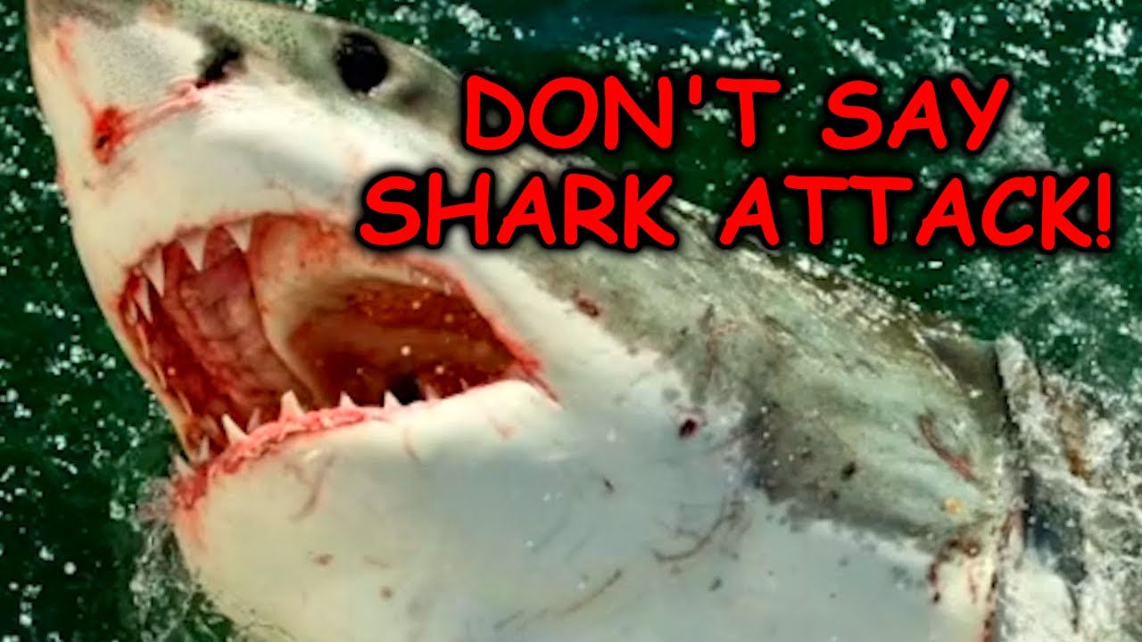 People Are Scared of Offending Sharks Now