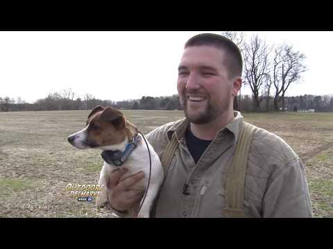 Harris Hawks And A Dog
