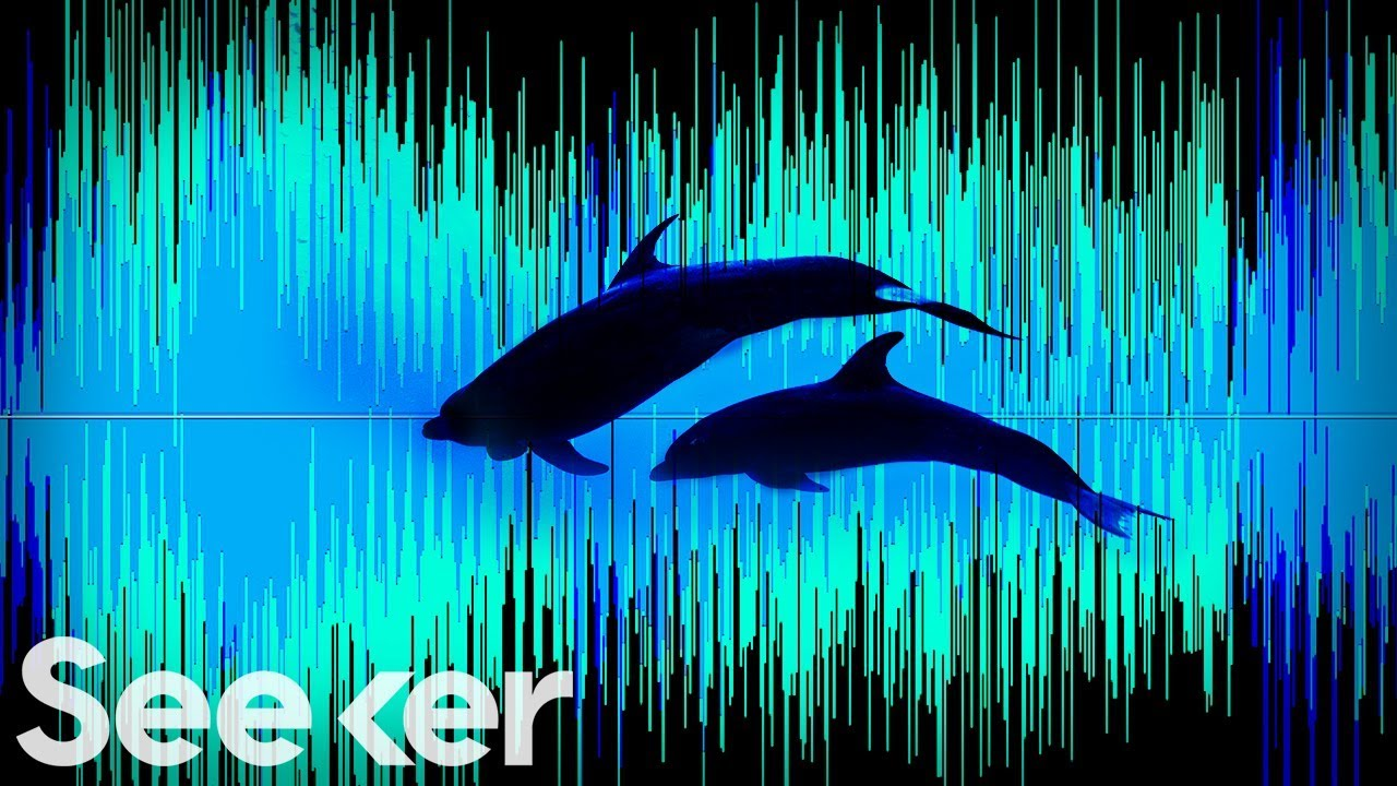 Could the Biggest Ocean Recording Ever Made Redefine Marine Science? | The Swim