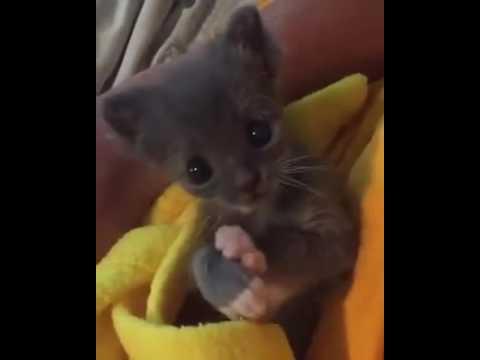 cat licking kittenKaynak: YouTube · Süre: 1 dakika2 saniye