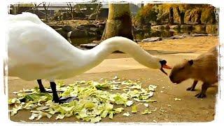 СМЕШНЫЕ ПТИЦЫ, приколы с животными | FUNNY BIRDS, fun wits animals #491