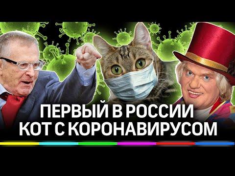 Первая кошка с коронавирусом поссорила Жириновского и Куклачёва
