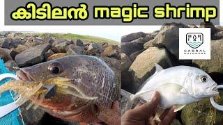 Budget shrimpൽ ഒരു fishing 🎣🎣 || ചെമ്പല്ലി, വറ്റ  പിടുത്തം [psycho angler].