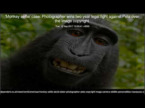 'Monkey selfie' case Photographer wins two year legal fight against Peta over the image copyright