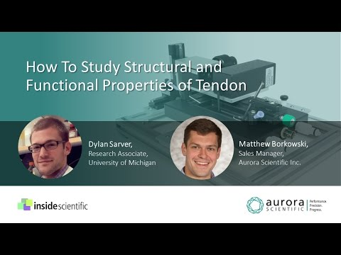 How To Study Structural and Functional Properties of Tendon