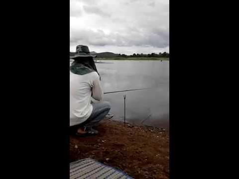 ตกชะโด ใส้ปลาทู1