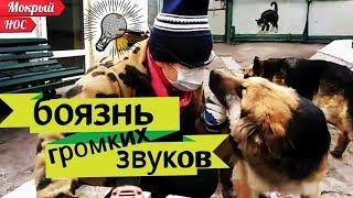 Как ПОМОЧЬ собаке преодолеть пугливость, страх, фобии