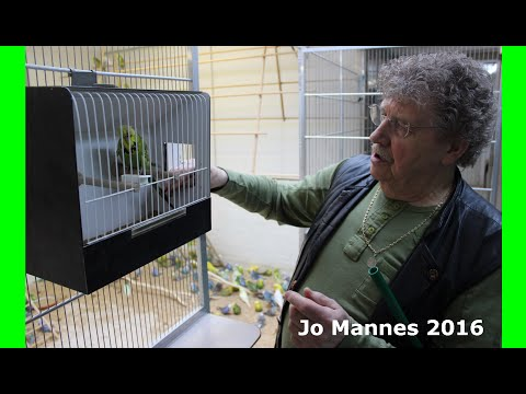 Champion Exhibition Budgie Breeder Jo Mannes- June 2016