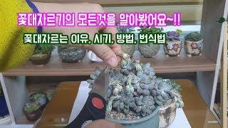 다육이꽃대자르기의 모든것(이유,시기,방법,삽목)을 알아봤어요~!!Succulents