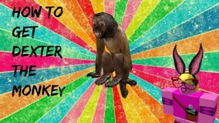 ROBLOX: How to get Dexter the Monkey!