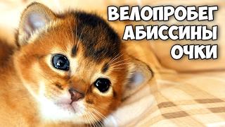 Велопробег по Битцевскому лесу || Рождение абиссинских котят || Когда и за сколько я купил свои очки