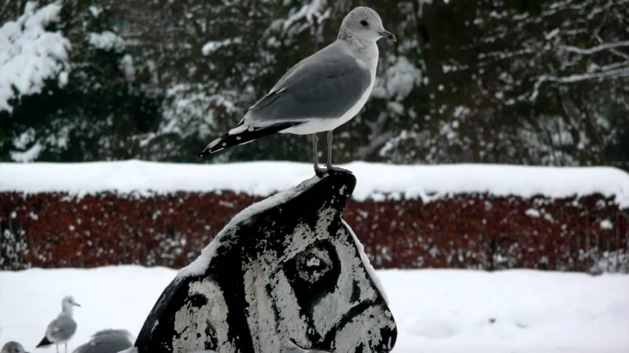 harry-nilsson-snow-shadshowadradna
