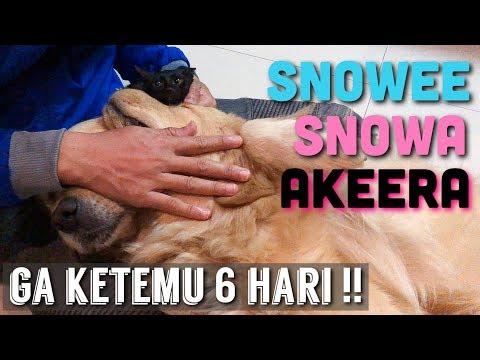 REAKSI SNOWEE DAN SNOWA AKEERA SETELAH DITINGGAL SYUTING MTMA!   SNOWEE THE GOLDEN