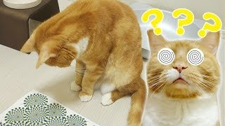 Cat playing with paper that has an optical illusion . if we saw the...