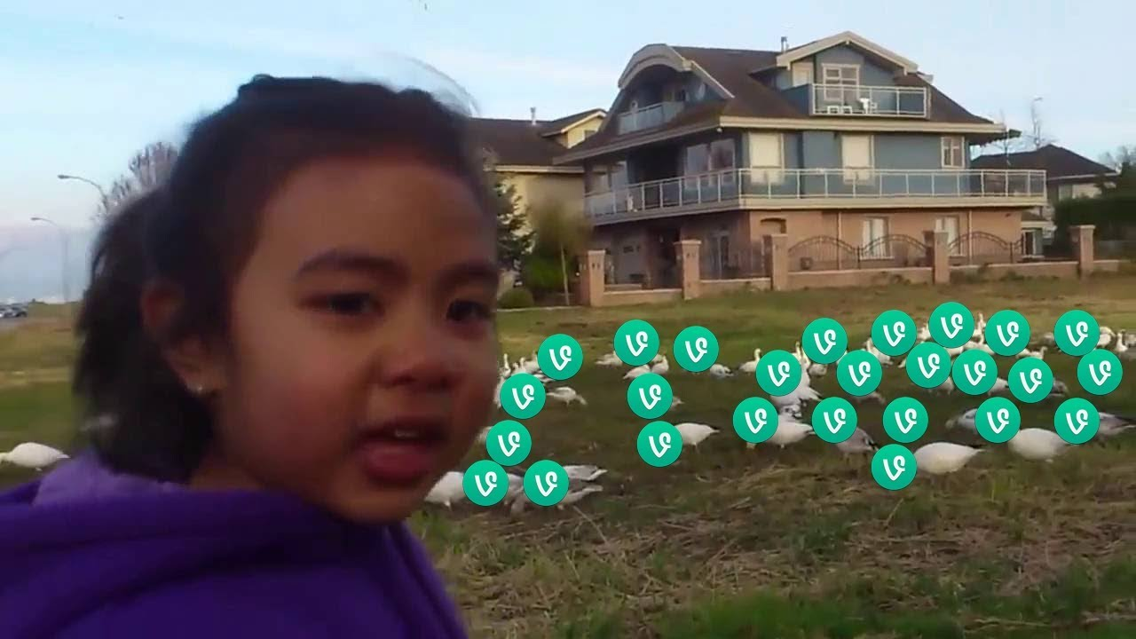 Look at all those vines - Vine Compilation