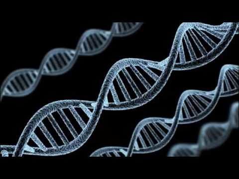 Epigenetics Your Food And Environment Determines Your Evolution