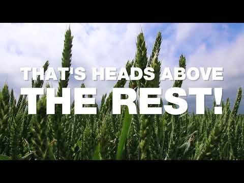 KWS Cochise: The highest yielding Recommended Spring Wheat