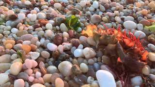 #NorthFork sea glass hunting trips. Trumans Beach is a hot spot for East Marion and Orient NY owners