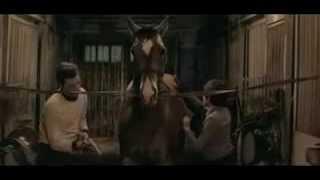 Самый красивый конь 1976 beautiful horse