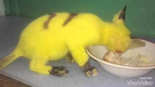 Pikachu là có thật nha! By Nam Trần
