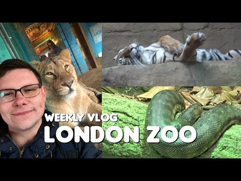 A Day At London Zoo