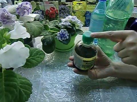🌼Удобрение для Глоксиний и других цветов. Хорошо действует🌼 🌱