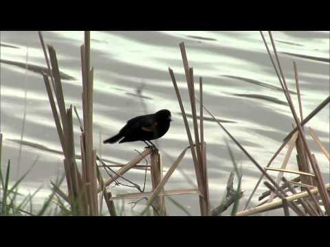 Shenandoah - Mormon Tabernacle Choir