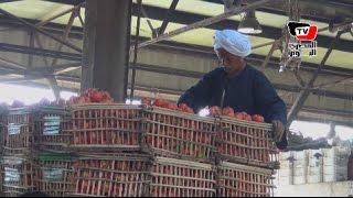 تجار سوق العبور عن أسعار «الأوطة»: الأسعار انخفضت والعبرة بالإنتاج