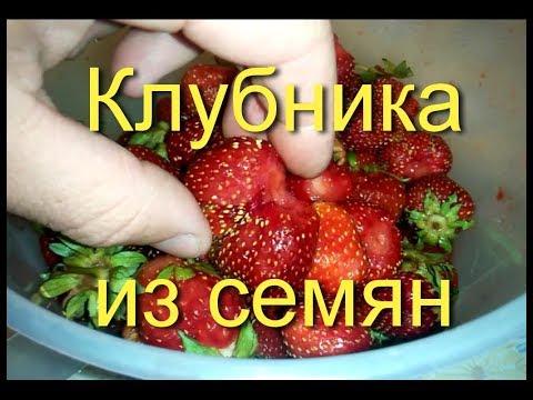 Узнай как вырастить клубнику из семян