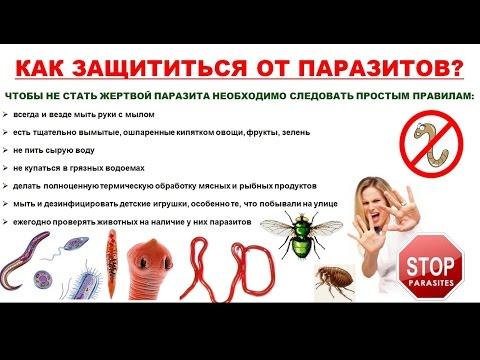 Профилактика глистов у взрослых: лекарства и препараты для