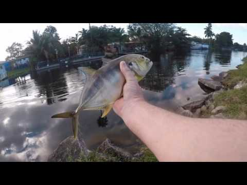 Tamiami Canal, Miami Fishing 12-16-16